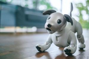 В КНР разработали роботизированную собаку