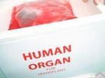 В Китае будет открыт сайт донорских органов