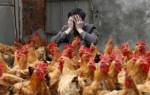 В Китае два жителя стали жертвами заражения птичьего гриппа