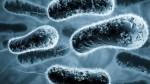 В Китае еще один человек умер от бубонной чумы