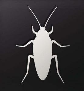 В Китае хотят использовать в медицине тараканов
