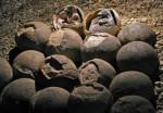 В Китае найдена доисторическая кладка яиц динозавра