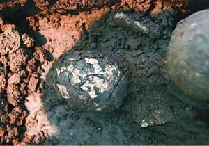 В Китае найдено древнее куриное яйцо возрастом две тысячи лет