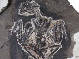В Китае нашли динозавра с радужным оперением