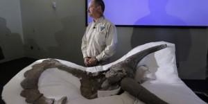 В Китае обнаружен динозавр-птица с крыльями из перьев