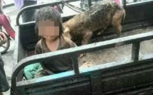 В Китае обнаружен мальчик, который жил со свиньями несколько лет