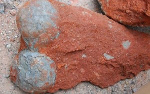В Китае обнаружен скелет и 213 яиц динозавра