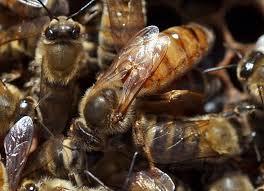 В Китае перевернулся грузовик полный пчел