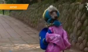 В Китае появилась необычная собака