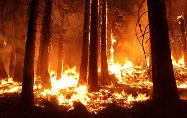 В Китае при тушении пожара в лесу погибли 30 человек