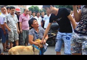 В Китае протестуют против любителей мяса собак