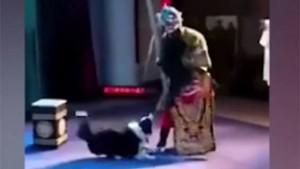 В Китае собака почти сорвала оперный спектакль