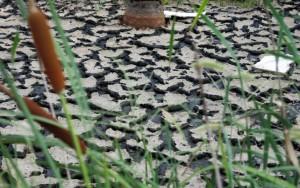 В Китае спасаются от жары всеми средствами