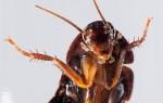 В ухе китайца обитало семейство тараканов