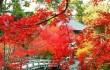 В Китае встречают осень