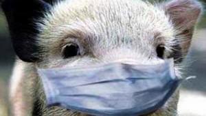 В Китае зафиксирована новая вспышка африканской чумы свиней