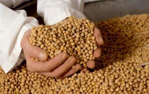 В Приморье были задержаны 50 тонн китайской сои