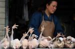В Шанхае разрешили продажу куриного мяса