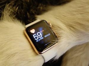 В лапу со временем китайский миллиардер подарил своей хаски золотые Apple Watch1