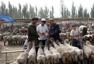 В провинции Кашгар меняют современную электронику на овец