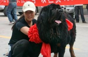 Власти Пекина стремятся ограничить рост численности опасных собак