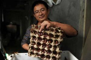 Все больше китайских ферм занимается разведением… тараканов. Для этого некоторые фирмы начинают их массово разводить в заброшенных постройках