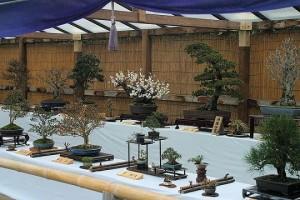 Значение и смысл искусства бонсаи