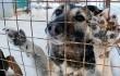 Зоозащитникам удалось спасти от съедения около 100 собак в Южной Корее