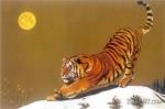 90 добровольцев будут участвовать в действиях по охране диких маньчжурских тигров