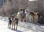 В провинции Юньнань 5 человек умерло от бешенства