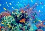 Всемирная конференция по морскому биоразнообразию началась в Шаньдуне