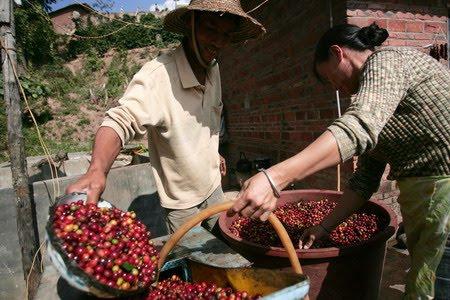 Кофейный бизнес в Китае
