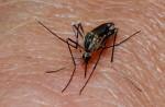 В Китае растет число заразившихся лихорадкой денге