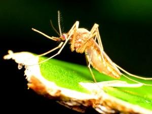 Эпидемия лихорадки денге в Китае приобретает массовый характер