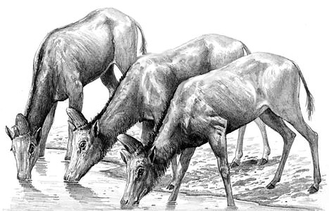 5 самых интересных палеонтологических находок весны в Китае