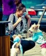 Собака в Китае не только дешевое мясо