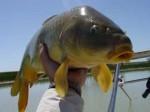 Китай пытается восстановить популяцию рыбы в Хуанхэ