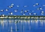 Более 160 тысяч птиц прилетели зимовать на озеро Поянху