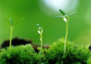 К 2020 году КНР планирует повсеместно внедрять «зелёные» технологии
