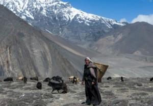 Землетрясение в Тибете