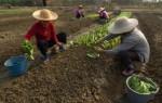 В КНР по итогам года ожидается рост доходов селян почти на 10 процентов