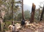 Пожилой человек задержан за вырубку леса для того, чтобы заработать на пирожки