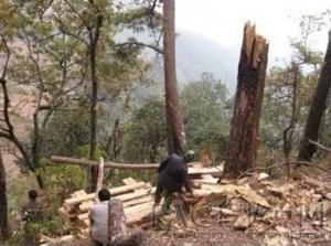 Китай, вырубка леса