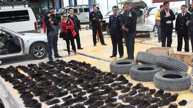 Осуждены преступники, занимавшиеся контрабандой медвежьих лап