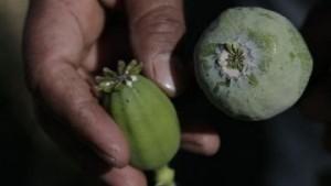 В Аомэне ужесточается борьба с наркоторговлей