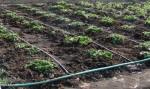 Только 50% полей в Китае орошаются по водосберегающим технологиям