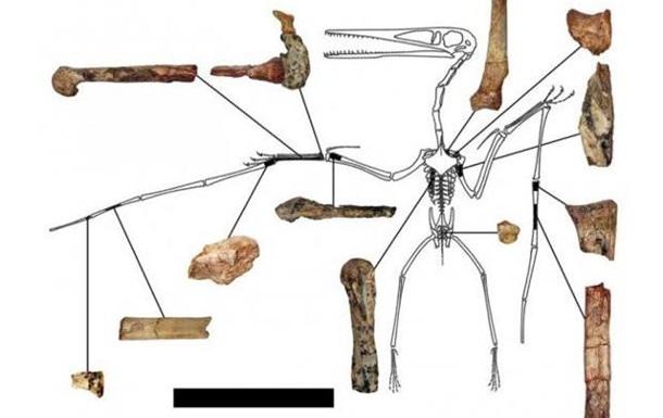 4 самых интересных палеозоологических музея Китая