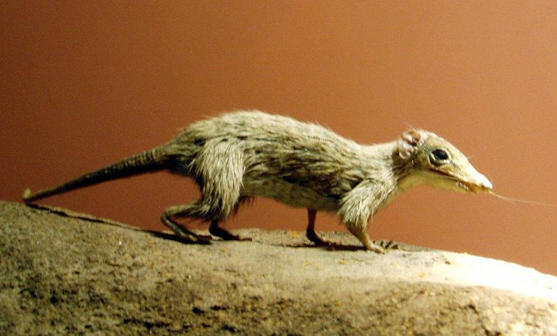 Китайские ученые предложили новую теорию возникновения млекопитающих на Земле
