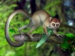 3 самых интересных палеонтологических находки в Китае за последние годы