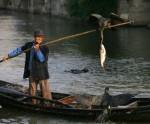 В Поднебесной за последние 40 лет количество видов рыб сократилось на 70 %
